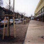 Frisch geplanzte Bäume in der Großbeerenstraße (Tilia Cordata) - 1998
